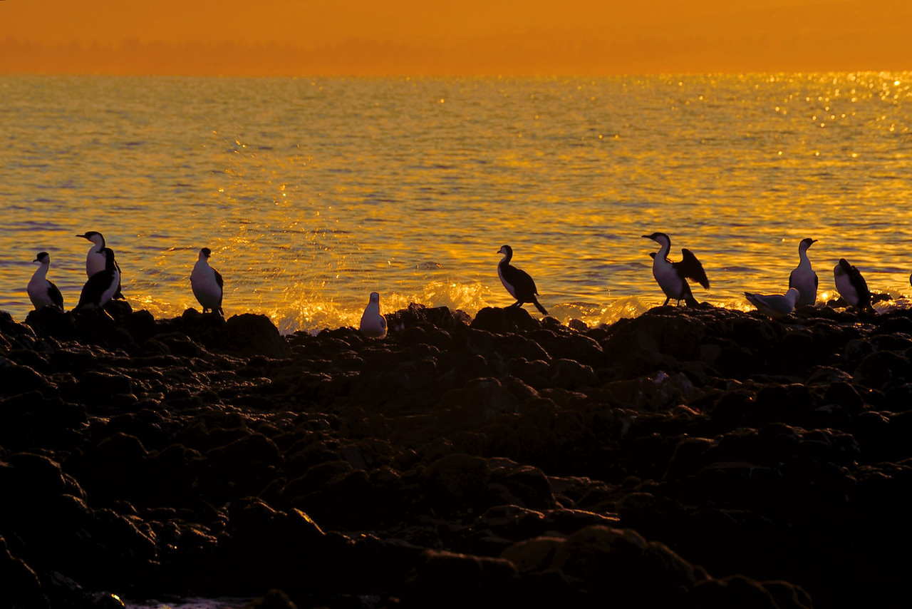 Sunrise at Roche's Beach