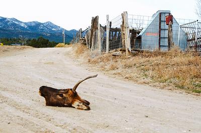 Early-Morning-Elk-Head-T05.jpg