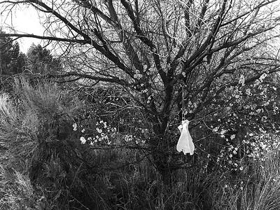 4418-apricot-tree-900@2x