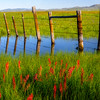 Marsh and fence reflection with spring flowers