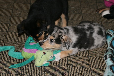 Ritz and Emmy playing