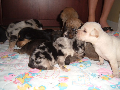 The puppies were brought to LCHS - and waiting for their foster parents to arrive.