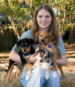 Ritz, Emmy and Holly on their final day together with their foster parent Sarah. These are 3 of the 9 puppies abandoned after being in foster care for two months.