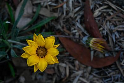 Vivid In Yellow