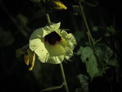 Fragile Petals