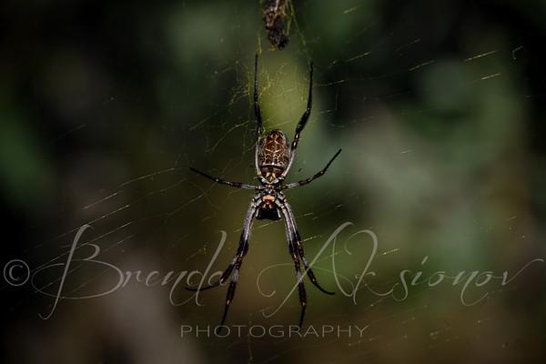 Arachnid Underbelly
