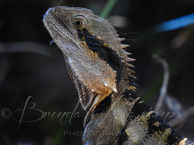 Dragon Texture
