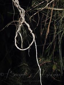 Natural Noose.