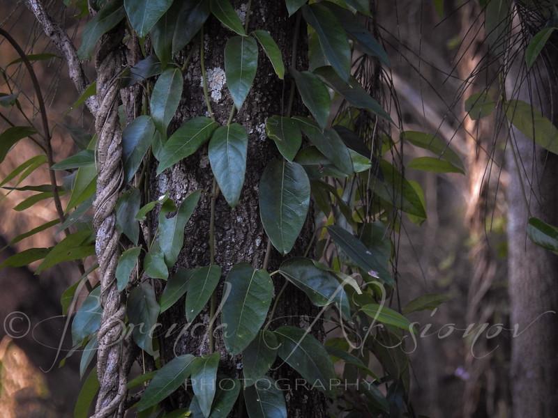 Creeping In The Bush