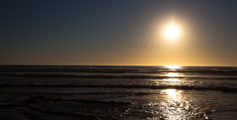 The birds on Pismo Beach, California