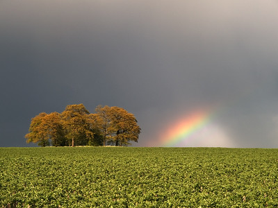 Rainbow caught in passing storm Leics UK. This is one of my reserved hotspots I visit all the time. Olympus E1, 14-54mm, 1/100s. F7.1