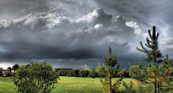 29 July 2013. Summer storms fire over the East Midlands and the bubbling convective clouds make great subjects. Using the trees to add foreground interest and compose. This is two landscape images stitched for the pano. Captured with Oly OM-D & 12mm,  f5 1/3200s