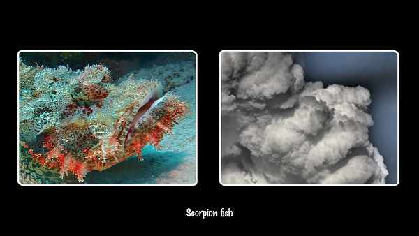 Scorpion Fish cloud