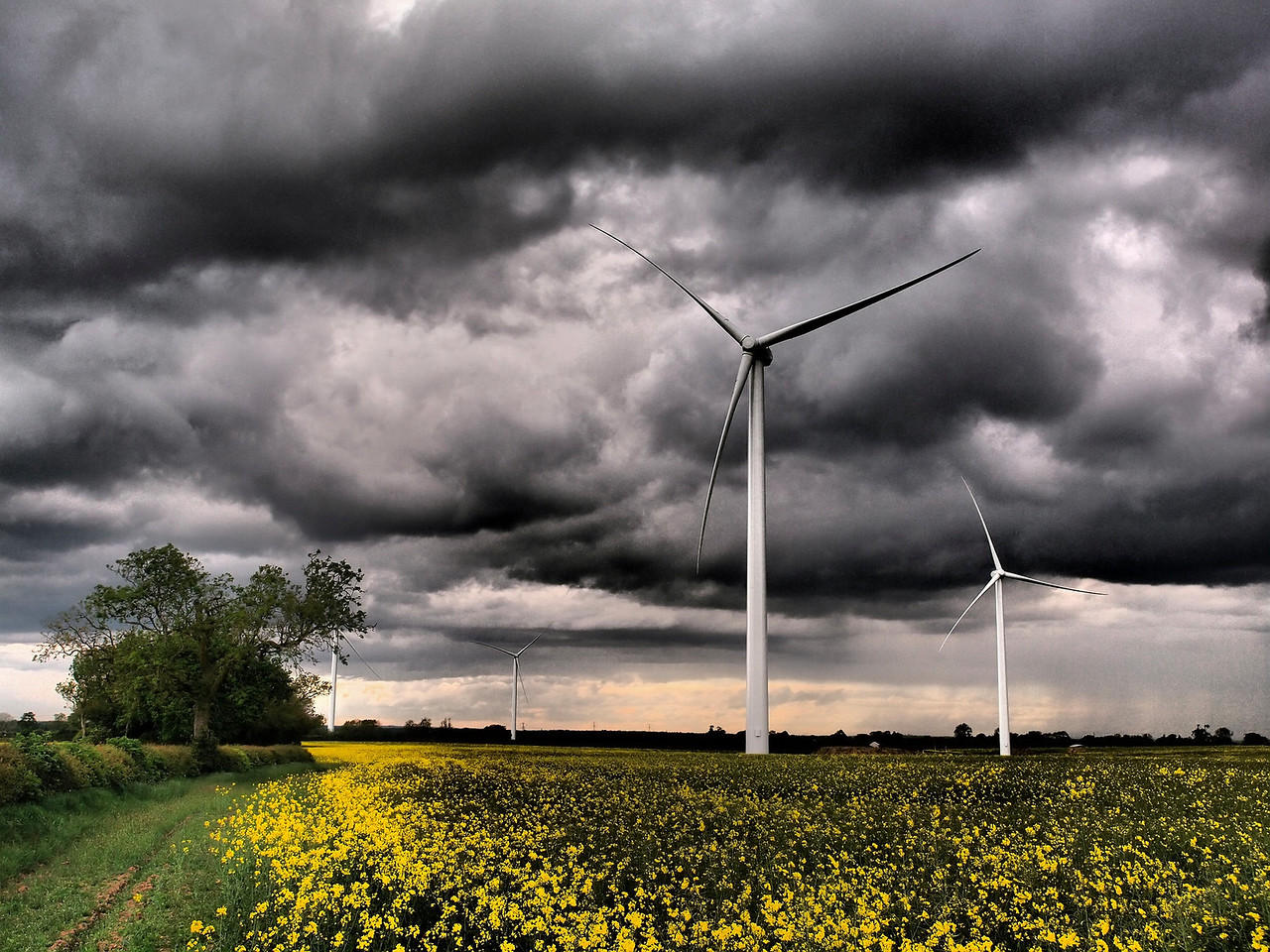 May 13 2011. Some great storm clouds rolling across parts of the Midlands. The Olympus E5 dramatic tone art filter really exacerbates the mood. Back over to the Gilmorton windfarm :-) I want to be the first person to capture a lightning bolt blasting the turbines. One day! E5 with 12-60mm SWD.