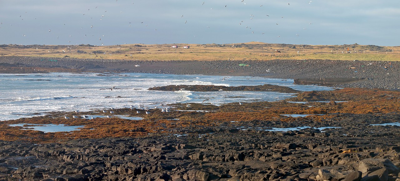 Grindavik on the south west coast. Plenty of bird life and migration underway.