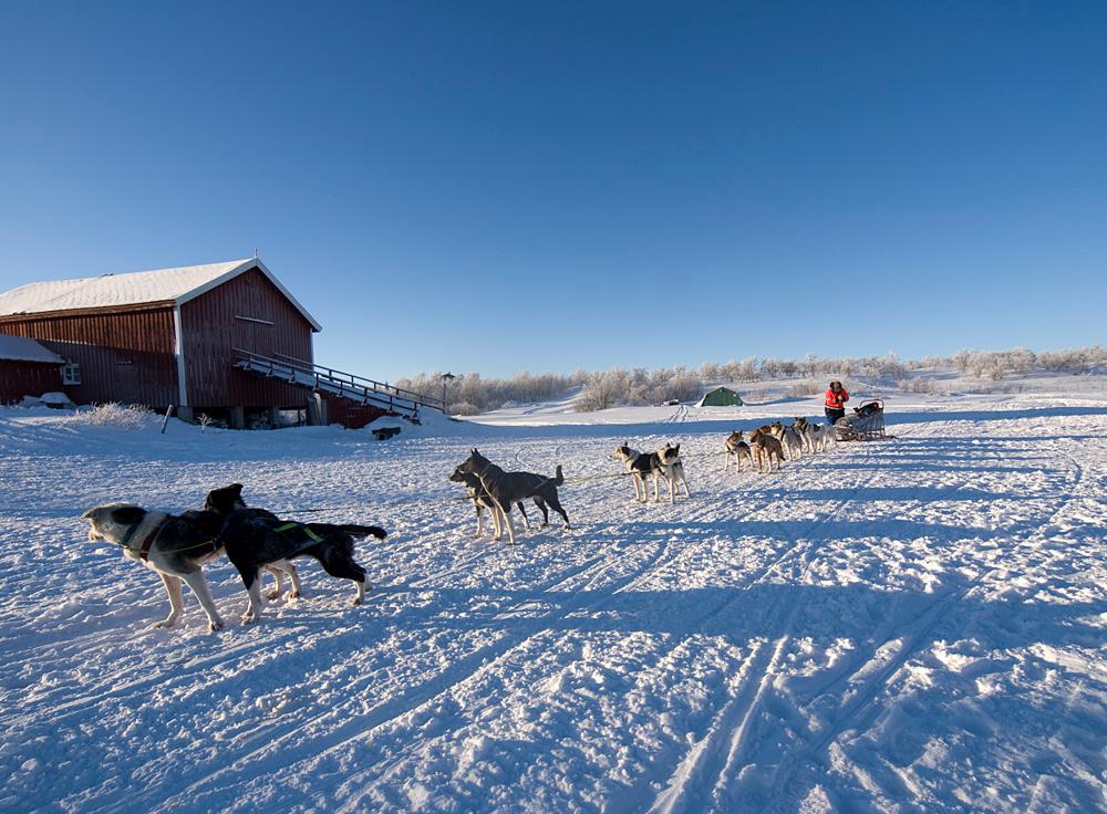 Nice shot of passing dog sled.