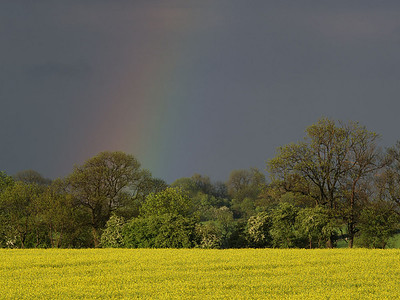 Faint close up of a nice primary bow taken back in 2006 with E1. Rape seed made a great foreground object/colour