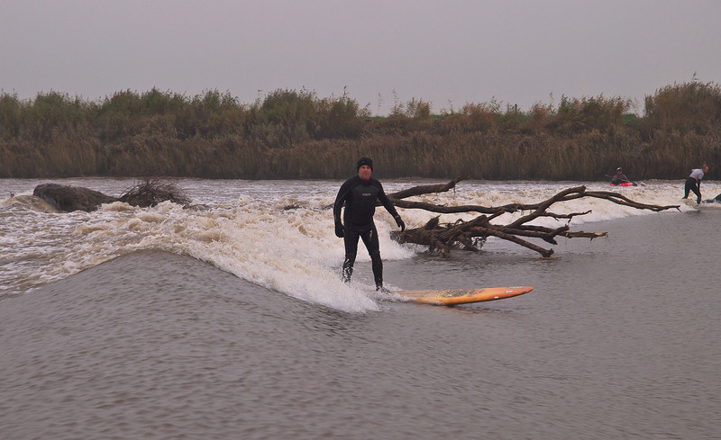 Hazards of river bore surfing include dodging trees! Missed it....
