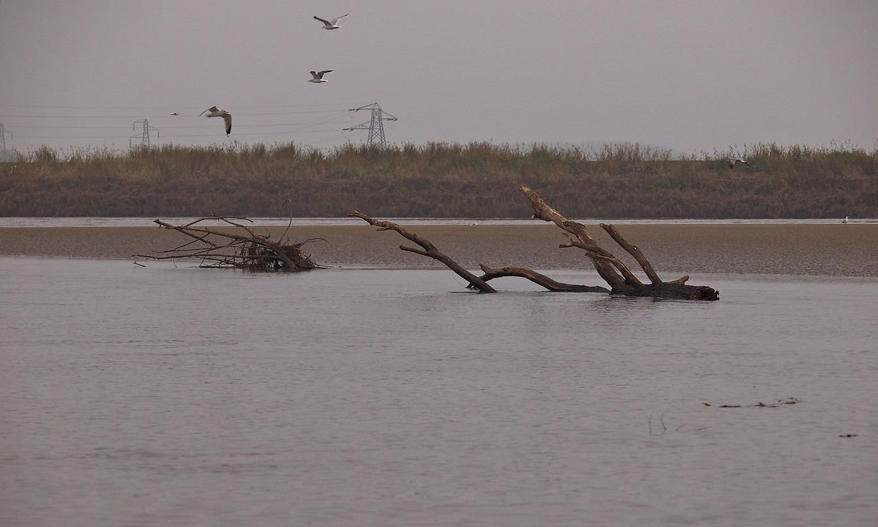 Birds and trees are a common sight, even IN the river!