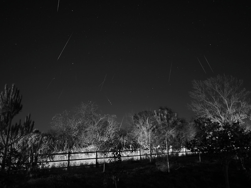 Gemenids Meteor Shower 13/14th Dec 2013. This single composite image was captured with the Olympus E-M1 & 12mm lens over a period of 4-5 hrs. It shows numerous gemenid meteors shooting across the Eastern sky between approx midnight on 13th to 4/5am on 14th.  How did I capture this? With camera & lens on tripod I set in manual mode and infinity focusing, ISO 320, F2.0, 10s exposure. Using the remote cable (set to lock) this forced the camera to take continuous exposures until the battery died (4-5hrs).  I then transferred the 2000 or so images to MAC and inspected each image identifying those which had captured individual meteors. I then imported all the meteor images into editing software (Pixelmator) and stacked each image on top of each other. I chose a foreground image (trees lit up) as the main image. I then selected each meteor image and highlighted the meteor, inversed the image and cut. This retained the exact location of each meteor and removed all the stars. Otherwise the stacked composite would have shown repeated stars for each meteor (which makes for a messy image). Once all the meteors were added the final image was flattened as the composite you see. This is a b&w version.