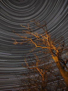 StarTrail 08/09 March 2014, Leicestershire, UK. The first clear night skies for months allowed me to run the battery pack for a 7.5hr continuous shoot. Captured with Olympus OM-D E-M1 & 12mm lens.  How did I capture it? - Camera on tripod F2. ISO 320, 15s. Manual focus set to infinity I framed the tree ensuring polaris (north star) around which all other stars spin was located just above & to the left of tree. The first shot was captured/exposed through the lcd screen and then using the remote cable (set to lock) and turning off lcd (maximise battery) I depressed shutter. This allowed the camera to shoot continuous for 7.5 hours. The tree I painted with a torch. To complete the process I transferred all images (High res JPEG) to MAC and imported/stacked in StarStax software. A few plane trails removed using Pixelmator software.