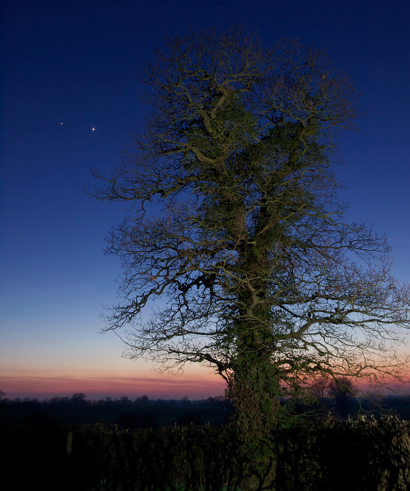 11 March 2012. Brightest objects in the sky atm Jupiter (left) and Venus coming together, with a close conjunction only a few days away. Using the Olympus E5 & 12-60mm SWD framed against a tree in field, and flash burst on tree. Nice colours and tones in this one.