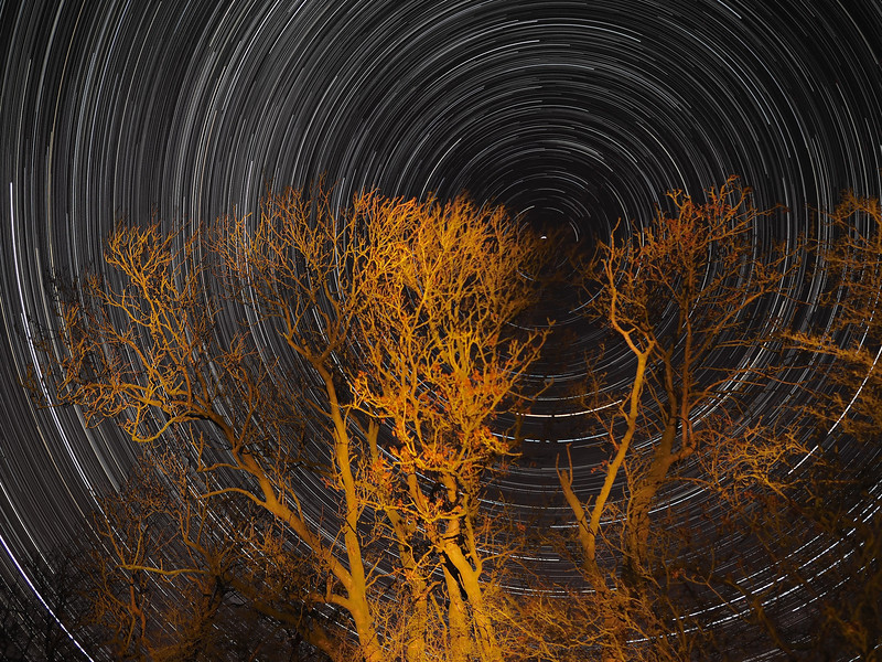 StarTrail, Dec 9/10 th 2013. Star trail shot with the Olympus E-M1 & 12mm prime (post firmware update). 2-3hrs of 10s exposures shot continuous (no in-camera noise reduction dark frame subtraction), F2.0 ISO 250. 4.5 hrs from a single battery (BLN-1) shooting continuous which is excellent. Approx 1000 No exposures combined with stacking software (StarStax) to produce the final composite showing Earths spin through the stars.   How did I capture it? - Camera on tripod with setting above. Manual focus set to infinity I framed the tree ensuring polaris (north star) around which all other stars spin was located at top right of trees. The first shot was captured/exposed through the lcd screen and then using the remote cable (set to lock) and turning off lcd (maximise battery) I depressed shutter. This allowed the camera to shoot continuous for many hours (until the battery died). The trees were paint lit by simply shining a strong torch for a few seconds. To prevent the lens from fogging/dew forming I strapped my DIY dew shield around the lens (Zippo hand warmer). Once the camera battery had died I transferred all images (High res JPEG) to MAC and imported/stacked in StarStax software. Plane trails removed using Pixelmator software. Voila :-)