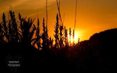 sunrise-6516