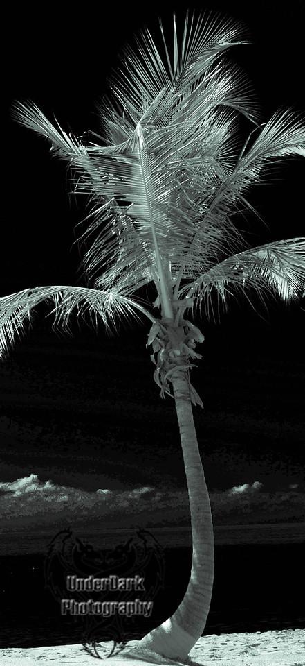 palm tree-