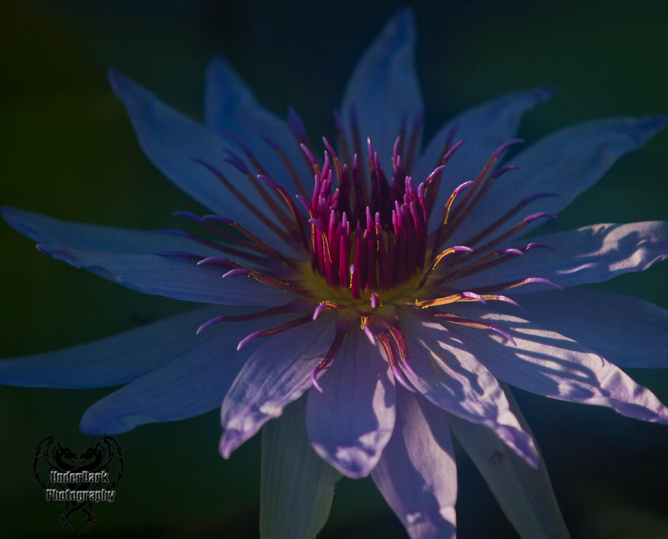 Lily-6584