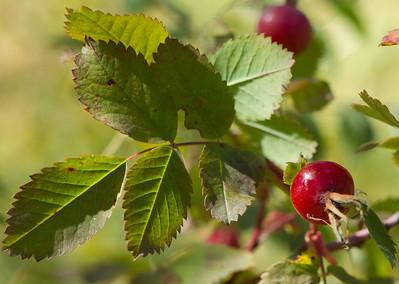 berry-1691