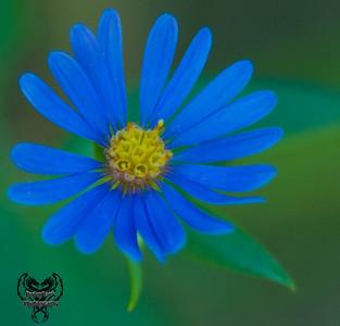 blue-1684