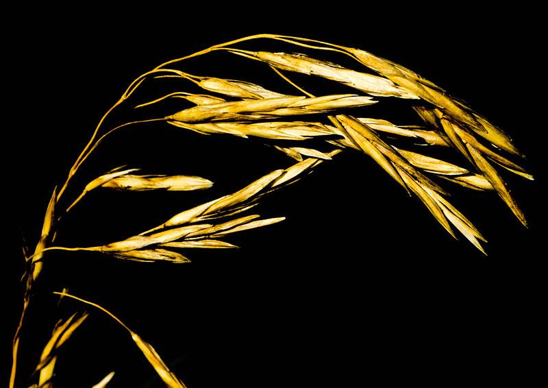 seeds-1704