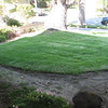 More of the front lawn.