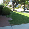 The front lawn looks okay.