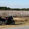 Enough of this cotton already.