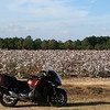Up in southern Georgia picking cotton.