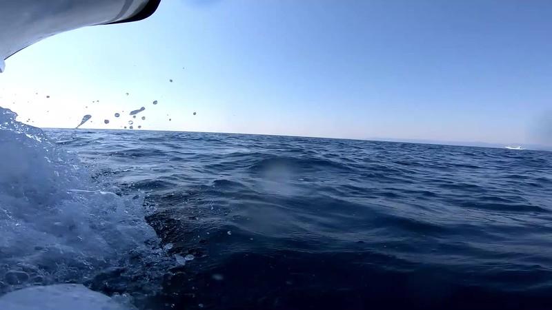 ハセイルカの群れ 水中撮影