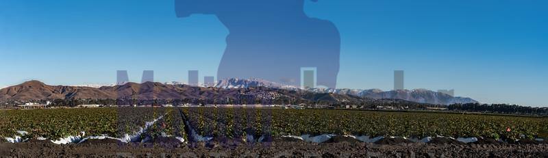 Winter season in Southern California.