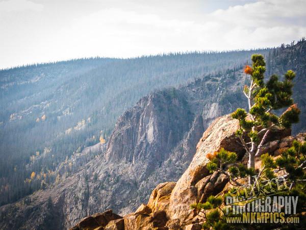 Grizzly Helena trail 103