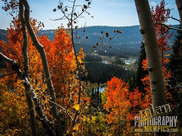 Grizzly Helena trail 041