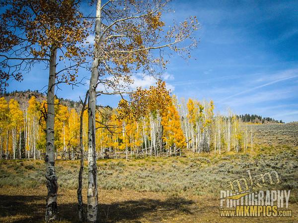Grizzly Helena trail 031