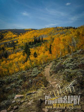 Grizzly Helena trail 054