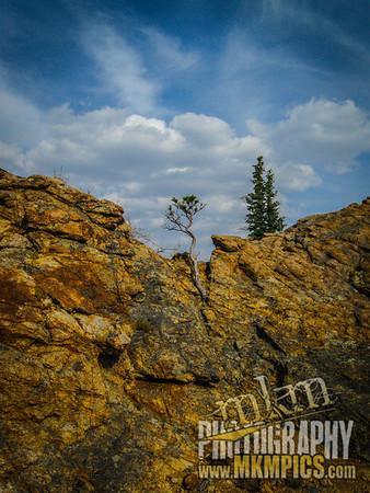 Grizzly Helena trail 105