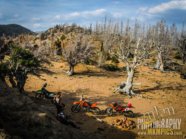 Grizzly Helena trail 111