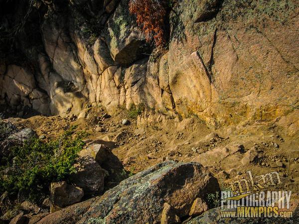 Grizzly Helena trail 082