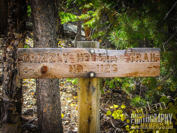 Grizzly Helena trail 053