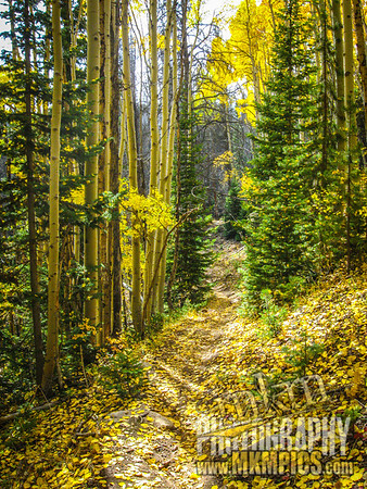 Grizzly Helena trail 050