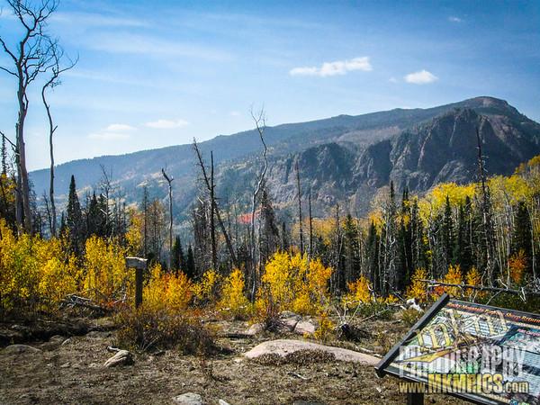 Grizzly Helena trail 013