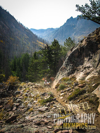 Grizzly Helena trail 080